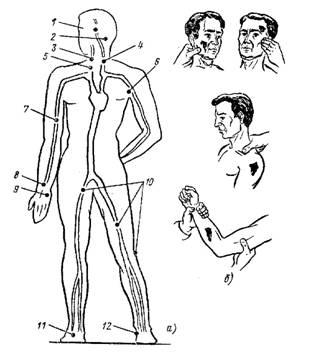 Пальцевое прижатие артерий при кровотечениях | Здоровье.net